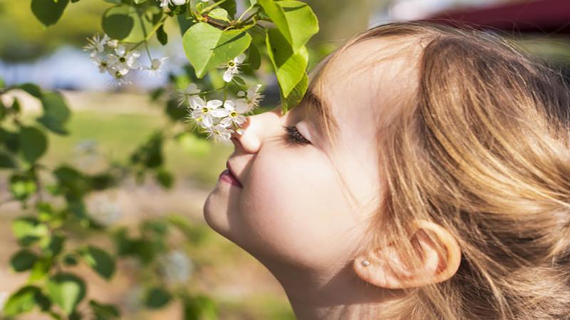 دلیل کم شدن حس بویایی