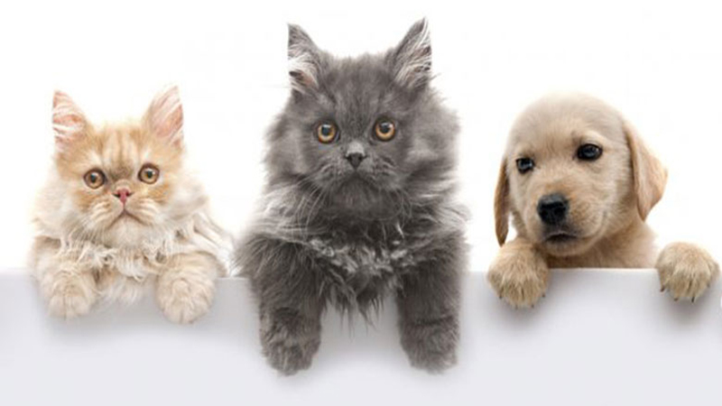 آلرژی به حیوانات خانگی