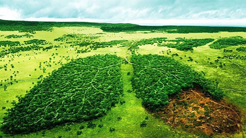 چگونه از محیط زیست خود محافظت کنیم ؟